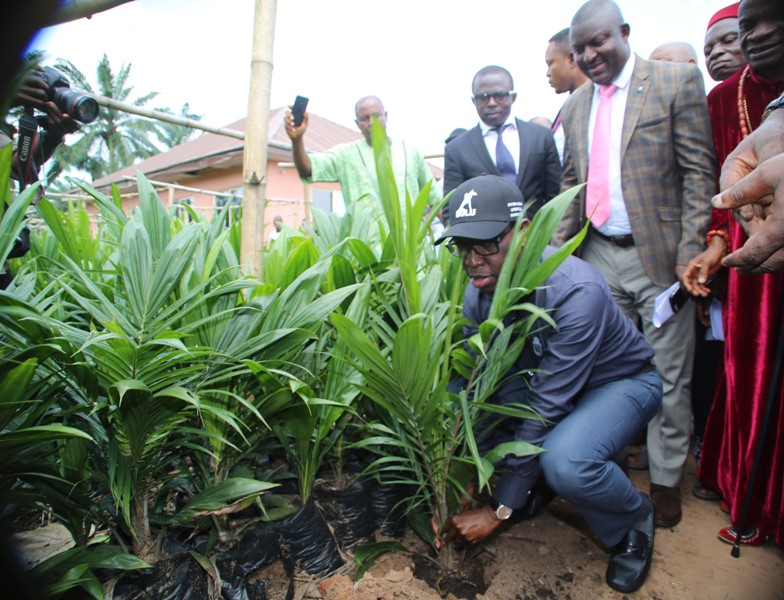 Delta State Governor, Senator Ifeanyi Okowa, planting a seedling during the flag off of the 2018 Small Holders Oil Palm Scheme at Ejeme-Unor, Aniocha South LGA.